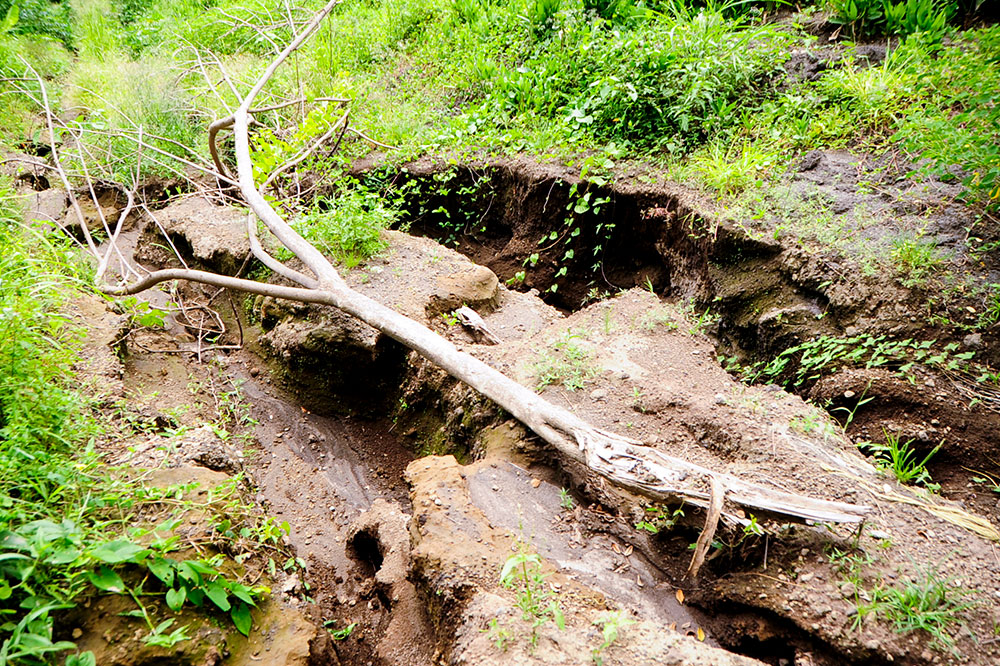 Volcano and Elsa cause thousands in damage to Waterloo farm