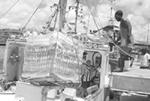 Hurricane Ivan – Test of Caribbean unity