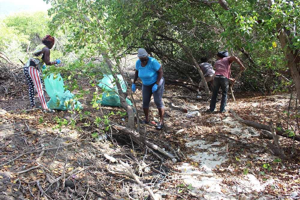 Project to eradicate rats on Frigate Island to continue
